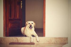 Quiero adoptar un perro, pero trabajo días largos. ¿Cómo satisfago sus necesidades y todavía pago las cuentas?