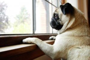 Ansiedad de separación: cuando tu perro no puede estar solo