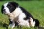 6 maneras de ayudar a tu perro con picazón