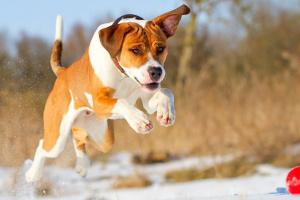 Cáncer de conducto biliar en perros