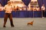 Bailando con tu perro.