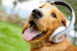 Como usar esencias para calmar a tu perro