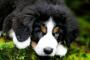 Elegir una raza de perro