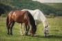 Comer de artículos no alimenticios en caballos