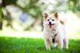 Inflamación del páncreas en perros