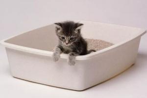 Posibles causas de la diarrea en su gatito