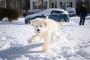 Maneras fáciles y asequibles de proteger las patas de su perro (más allá de los botines)