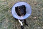 Descarga de la oreja de un perro: causas y tratamientos