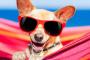 Los 5 principales peligros para la salud de su perro en la playa