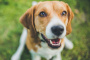 Una prueba simple que su perro necesita cada año