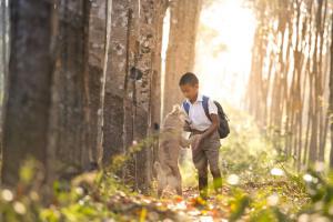 . Consejos y trucos para ayudar a su mascota a volver a la rutina escolar