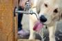 ¿Cuánta agua debería beber mi perro?