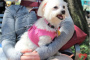 ¿Pueden los perros tener cáncer de mama?