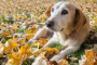 Carcinoma de células transicionales del tracto urinario en perros