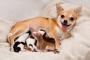 ¿Cuanto tiempo están los perros embarazadas?