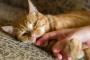 Algunos tips o consejos de ayuda para que su gato pare de morder
