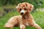 Cálculos biliares en perros