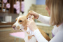 ¿Te preguntas cómo limpiar las orejas de tu perro? Una guía práctica (¡y con qué frecuencia!)