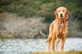 3 señales de que puede ser hora de cambiar la dieta de tu perro