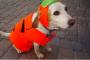¿Cómo mantengo mi perro feliz y seguro este Halloween?