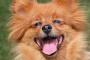 Cómo mantener a su perro feliz y sano