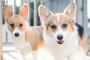 ¡Razones por las que dos perritos son mejores que uno!
