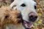 Ayuda a sus perros a llevarse mejor con los demás
