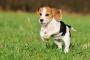 Cómo entender el lenguaje corporal de tu perro