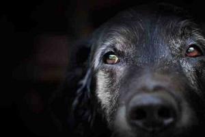 Haga que los últimos días de su perro sean sus mejores días.