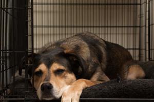 Consejos simples para los perros y sus cajas