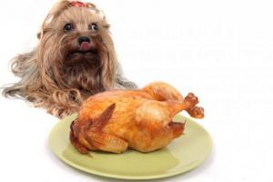 7 recetas caseras de la comida y de la invitación del perro de la acción de gracias.