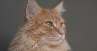 La rinitis y la sinusitis en gatos