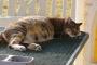 Salud de gatos: ¿Qué se considera normal?