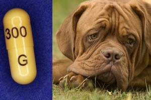 Gabapentina para perros: usos, dosis y efectos secundarios.