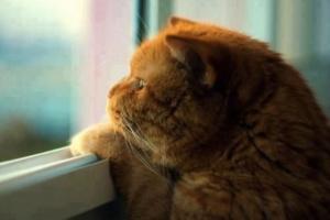 La tristeza en los gatos, señales de depresión