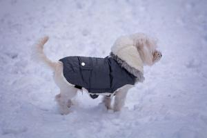Cómo cuidar a los animales en invierno