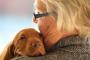 5 cosas que puedes hacer para extender la vida de tu perro