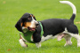 Inhalación de humo en perros