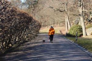 Formas de ayudar a su perro a vivir más tiempo