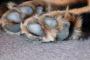 4 razones para no ignorar la uña del pie rota de una mascota
