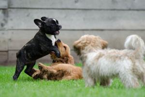 Centros de adopción para mascotas.