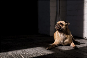 ¿Por qué los perros gruñen en algunas personas y no en otras?