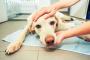 ¿Son todos los tumores de perros cancerosos? Esto es lo que debe saber
