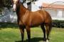 Envenenamiento por plomo en caballos