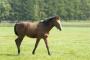 Estreñimiento y cólico en caballos