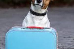 Cómo evitar volver a hospedar a su perro familiar