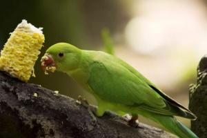 Razones por las cuales NO deberías tener un ave como mascota