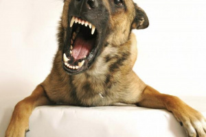 Cómo acercarse a un perro temeroso, tímido o agresivo
