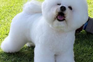 ¿Cuáles son las razas de perros que viven más tiempo? Estos perros a menudo viven en sus adolescentes