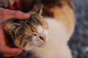 10 consejos respaldados por la ciencia para gustarle a un gato